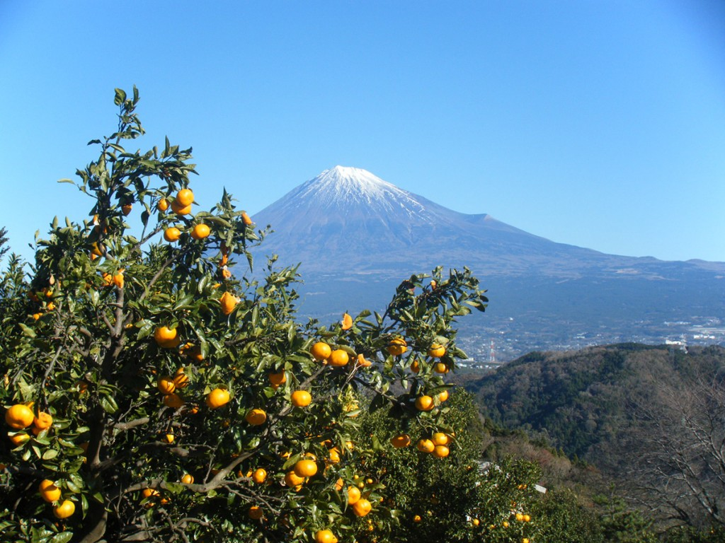 蜜柑と富士山